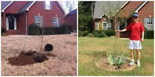 Backyard Trees Landscaping Ideas Step 1 U2013 Landscaping Ideas For Small Front And Backyards