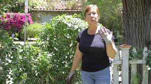 how to grow roses on a fence garden space youtube