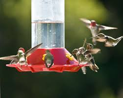 What Height To Hang A Picture Where To Hang Hummingbirds Feeders Placement Tips
