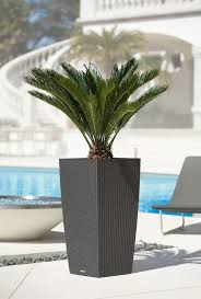 12 best entry way planters images on pinterest tall planters