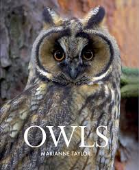 Owl Lovers by Owls Marianne Taylor 9780801451812 Amazon Com Books