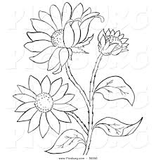 picture of flowers of plants drawing flowering plants drawing