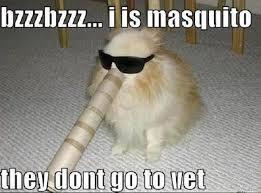 Vet Memes - masquito meme they don t go to the vet