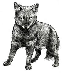 animals anonymous extraordinary canids by mylovelypet on deviantart