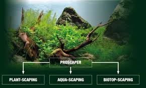 proscape u2013 more than just aquascaping