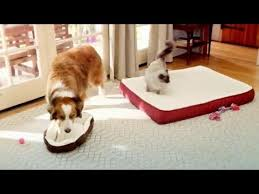 Petsmart Dog Bed Tv Commercial Petsmart Resolve To Rest Up Dog Forced To Sit In
