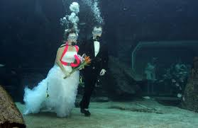 underwater wedding underwater wedding in trang to feature many activities this year