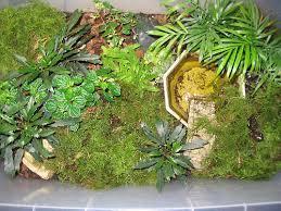 storage bin terrarium aquarium vivarium etc caudata org