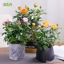 livraison de fleurs au bureau acheter graines de roses en pot de fleurs de plantes quatre saisons