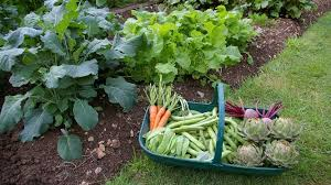 how to start a vegetable garden for beginners how to start a vegetable garden hirerush blog