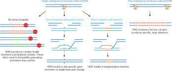 genome editing technologies for gene and cell therapy molecular