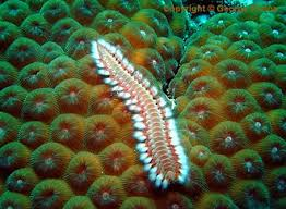 polychaete instagram hashtags online web viewer