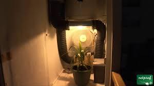 montage chambre de culture culture en intérieur sous lumière artificielle 1 la lumière