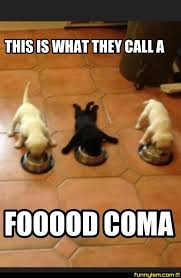 Food Coma Meme - doggy food coma funny pics funnyism funny pictures