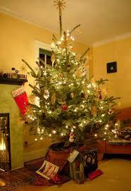 plant christmas tree christmas lights decoration