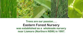 australian native plant nursery brisbane eastern forest nursery u2013 plant supply for forestry bush