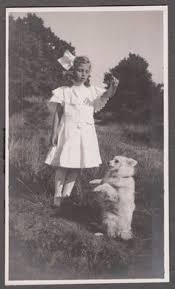 american eskimo dog breeders new england a little to medium size nordic type dog the american eskimo dog