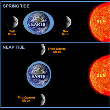 1 schematic of and neap tides formation based on the sun