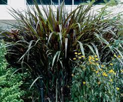 of a fall garden grasses prince