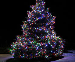 Led Lights For Outdoor Trees Phantasy Reasons To Use Led Tree Lights Popsugar Home To