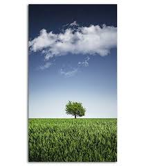 lone tree hd wallpaper for your mobile phone spliffmobile