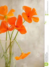 california poppy royalty free stock images image 5557519