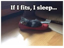 Grumpy Cat Sleep Meme - if i fits i sleep grumpy cat meme on me me