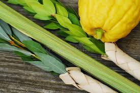 lulav and etrog for sale lulav and etrog stock image image of religious rustic 20321727