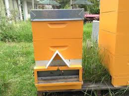 getting rid of wasps in your garden the natural way kiwimana