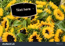 sunflowers for sale sunflowers sale flower market sign ready stock photo 703054888