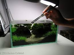Aquascaping World 19 Best Planted Fish Tank Ideas Images On Pinterest Aquarium
