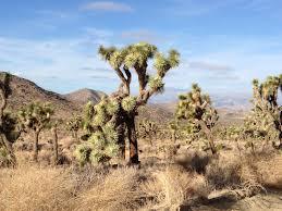 the mojave desert land trust heartbeat report