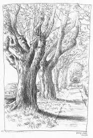 trees sketch by david j lane