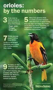 588 best gardening it u0027s for the birds how to u0027s birdhouses