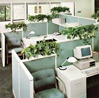 plants for office the benefits of plants in the office cleaner and cooler air