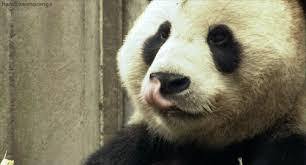 Memes De Pandas - osos panda memes para facebook en español memeando com