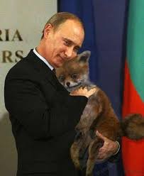 Stoned Fox Meme - stoned fox offends russians telegraph