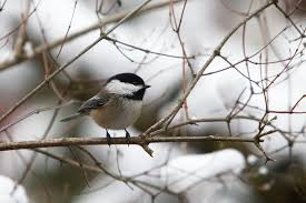 backyard birds u2013 more or less