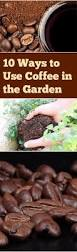 Why Are My Plants Turning by Why Are My Plants Turning Yellow Vegetable Garden Infographic