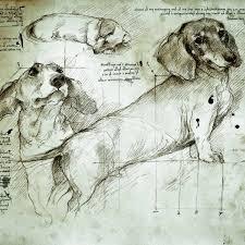 leonardo da vinci drawings of a dachshund art drawing
