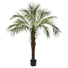 nearly 6 robellini palm tree target