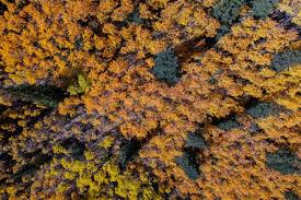 Colorado Fall Colors Map by Aspen Turning And Fall Foliage In Colorado Rockies Dronestagram