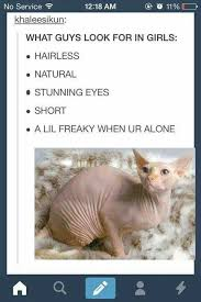 Hairless Cat Meme - 22 best sphinx images on pinterest kitty cats sphynx cat and sphynx