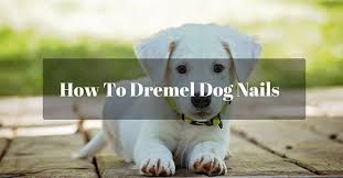 a short and useful guide on how to dremel dog nails puptipper