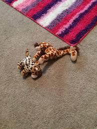 where is baby giraffe life of bri