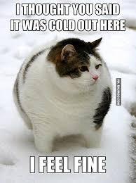 Funny Snow Meme - funny cat in snow meme bajiroo com