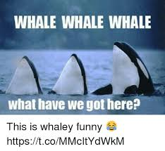 Whaling Meme - 25 best memes about whale whale memes