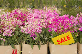 orchid plants for sale box of orchid flower are on sale in plant market thailand stock