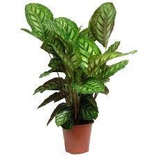 plante d駱olluante chambre crea vegetal les plantes dans une chambre