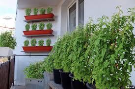 starting a balcony garden stvn eu